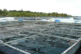 Produção de peixes em cativeiro alcançou 640 mil toneladas em 2016 | Editora Stilo