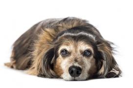 Nutrición canina por etapas