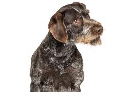 Guía para leer la etiqueta del alimento para mascotas