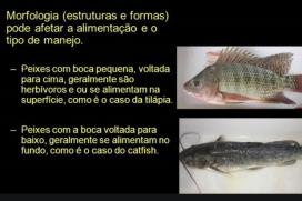 Diferenças entre rações para variadas espécies de peixes   Luiz Gomide Ferraz