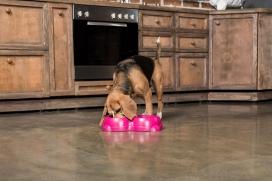 Primicia sobre el Almacenamiento de Alimentos para Mascotas