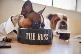 Los Perros eligen su Alimento según su composición nutricional