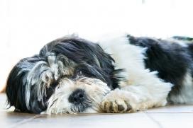 Lo que debes saber sobre el Extracto de Malta en los Alimentos para Mascotas